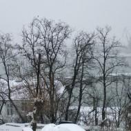 Ruse Bulgaria,winter in the park